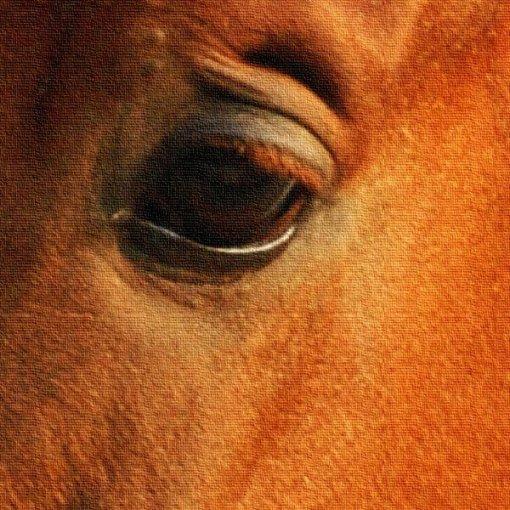 Adesivo envelopamento de porta cavalo no estábulo